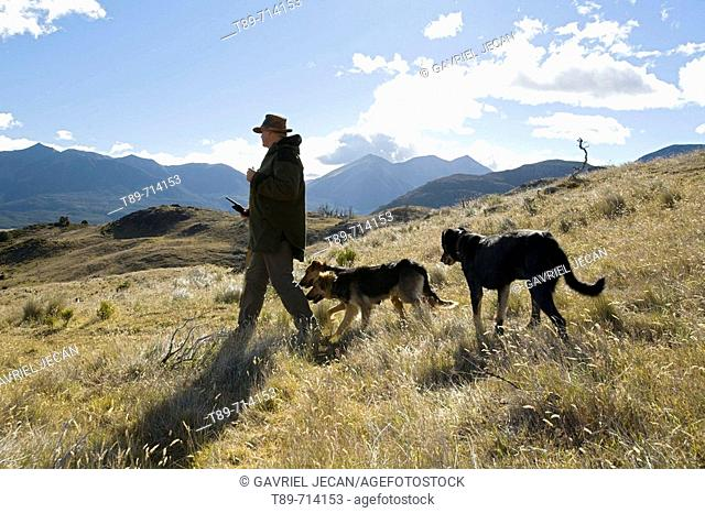 Sheeperd and Sheep dogs in the Southern Alps
