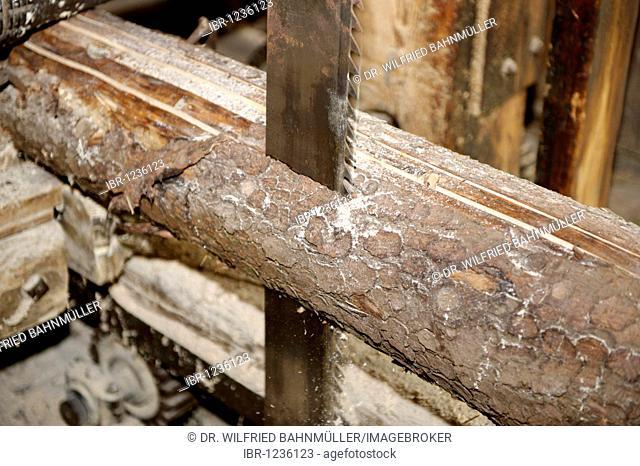 Historic saw, sawing of a tree trunk, rift saw, sawmill