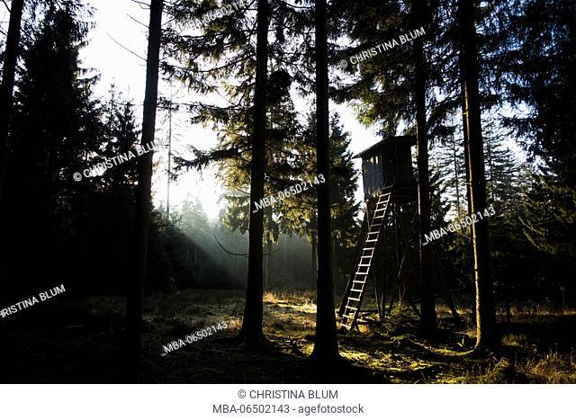 High seat in the spruce timber forest, Hochsauerland, Sauerland, North Rhine-Westphalia, Germany