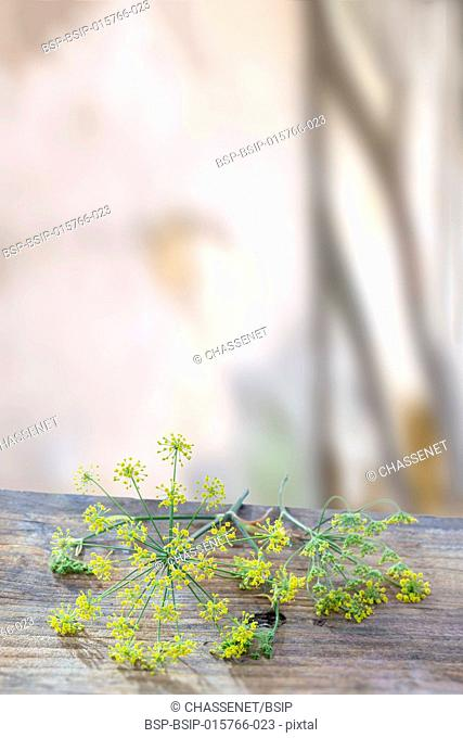 Flowering plant dill (Anethum graveolens)lyuing o wooden board over timbered background