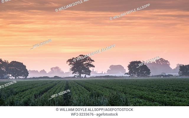Sunrise over Suffolk fields