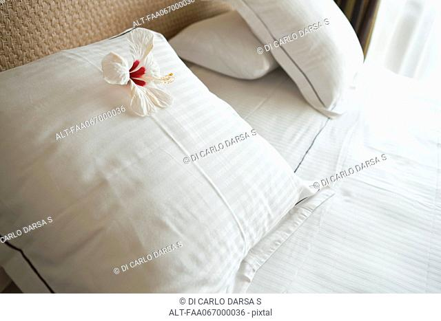 White hibiscus flower head on pillow