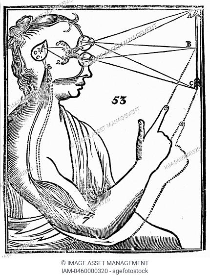 Descartes' idea of vision, showing passage of nervous impulse from the eye to the pineal gland and so to the muscles  From Rene Descartes' 'Opera Philosophica'