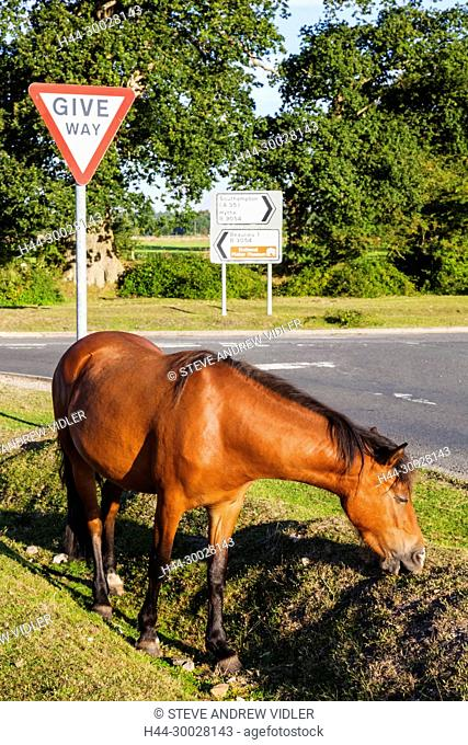 England, Hampshire, New Forest, Horses Walking on Roadside