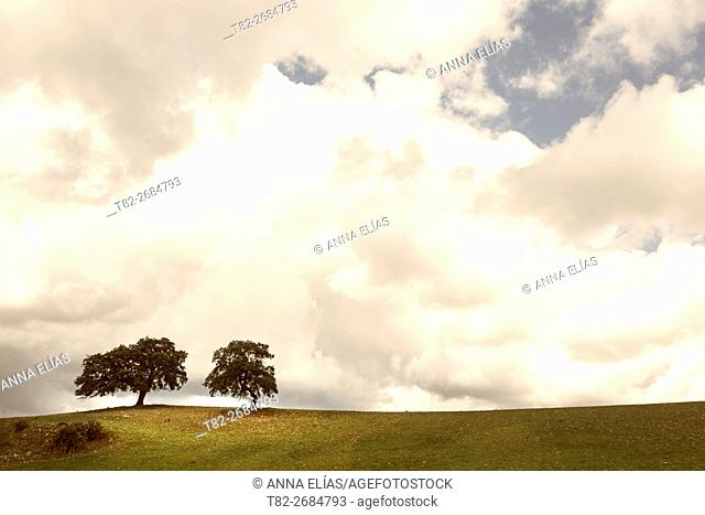 meadow and two oaks Quercus ilex with cloudy sky, Sierra de Sevilla, Andalusia, Spain, Europe