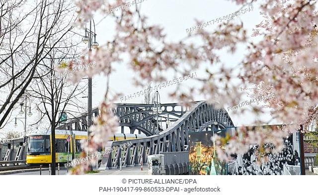 03 April 2019, Berlin: Almond trees bloom in front of the Boesebrücke. The Boesebrücke bridge connects the Berlin districts of Wedding and Prenzlauer Berg