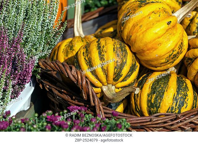 Autumn display with pumpkins and plants
