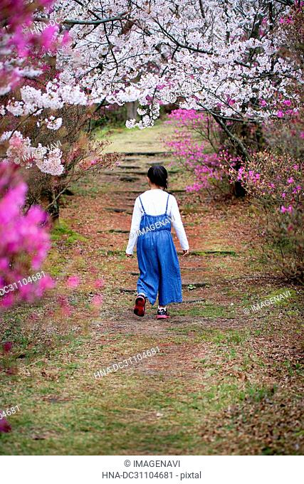 Girl with Cherry Blossoms