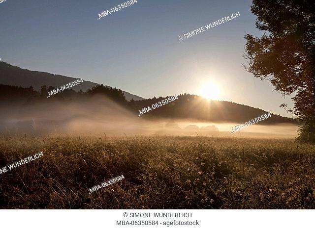 Fog on a summer morning