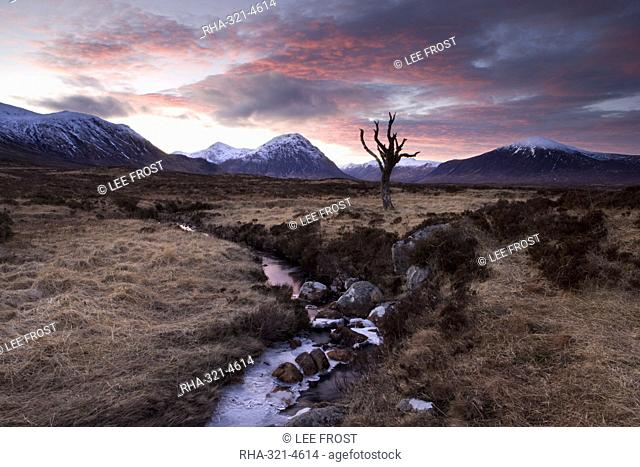 Winter view of Rannoch Moor at sunset with dead tree, frozen stream and snow-covered mountains in the distance, near Fort William, Highland, Scotland