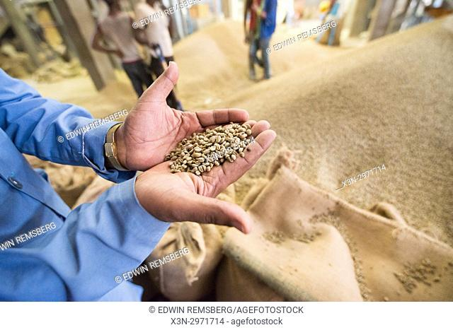 Addis Ababa, Ethiopia - Ethiopian male worker holding a handful of arabica coffee beans at Oromia Coffee Farmers Cooperative