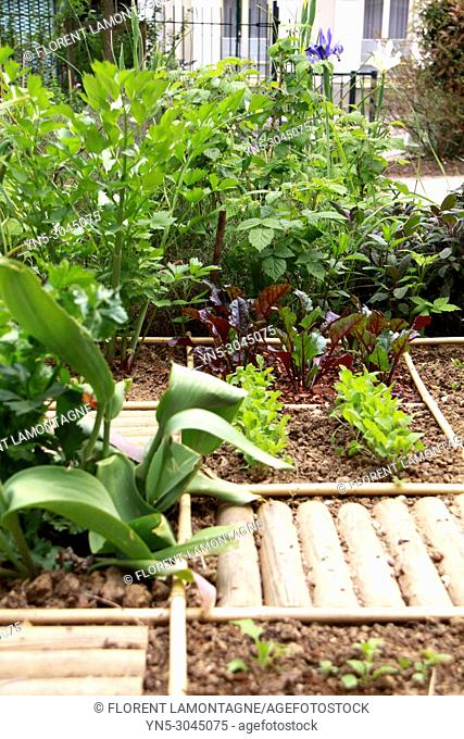 Squared vegetable garden in city with parsley, beetroot, iris flowers and salad