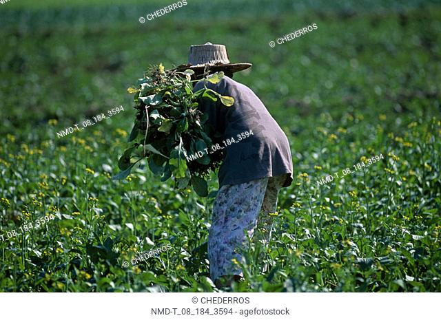 Rear view of a woman working in a field, Thailand