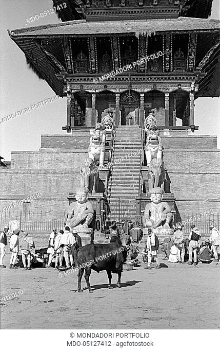 A bull at the entrance of a temple. Nepal, 1965