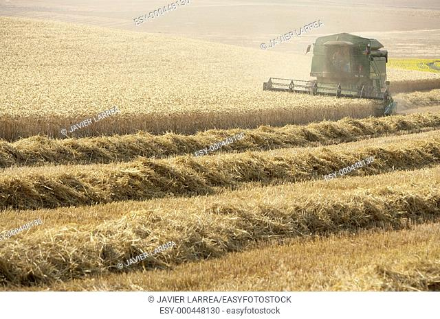 Combine-harvester, wheat fields, Finca Learza, near Estella, Basque Country, Spain