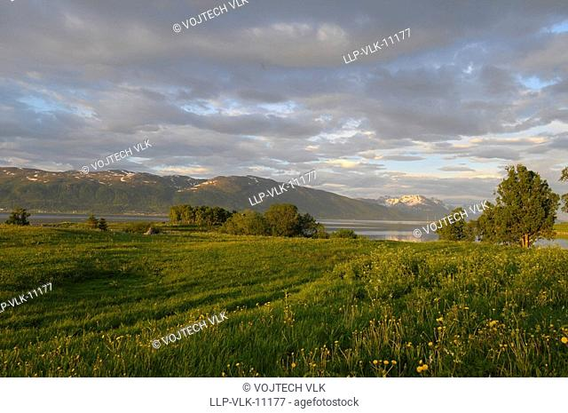 The green meadow and violet sky with clouds during sunset