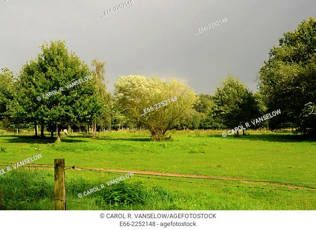 Pasture still in sunlight as grey sky of thunderstorm approaches. Shot In Limburg province of the Netherlands