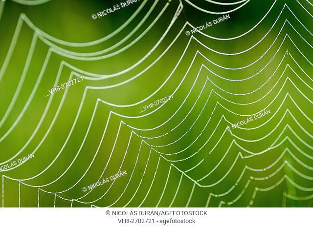 Spider web. Extremadura. Spain