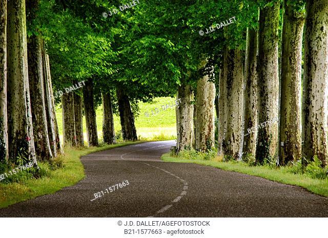 Pilgrimage way to Santiago de Compostela: between Nogaro and Aire sur Adour, Gers, Midi-Pyrenees, France
