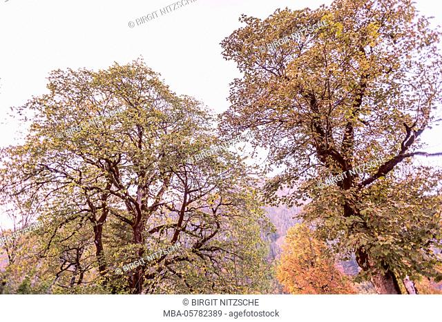 Old trees in autumn