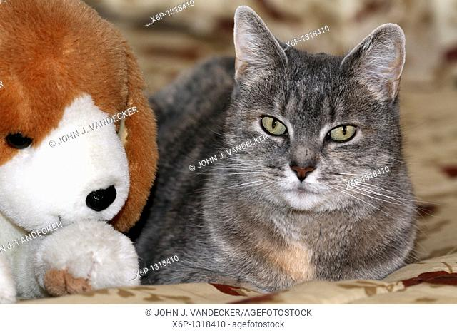 A Housecat sitting next to its friend - a stuffed Beagle Dog toy  Photo is of the Photographer's Mother's cat