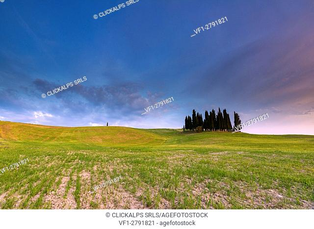 The cypress of San Quirico d' Orcia, province of Siena, Tuscany, Italy