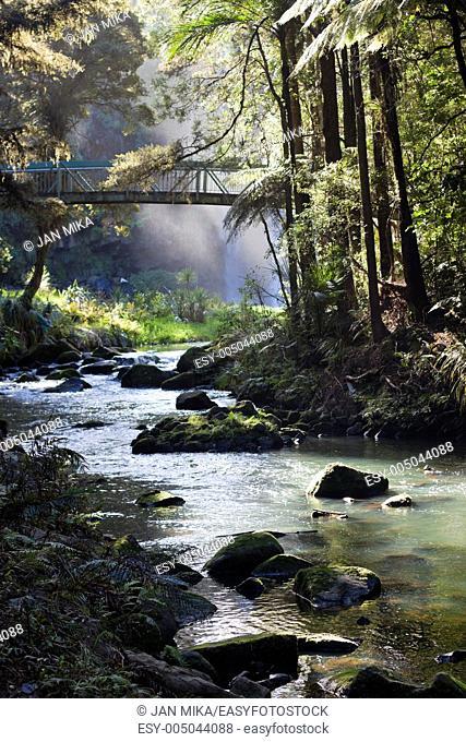 Whangarei forest Whangarei, New Zeland