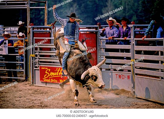 A rodeo bull rider riding a bull