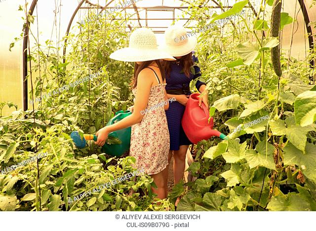 Two females wearing sun hats, using watering can to water plants in greenhouse