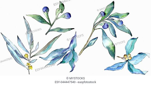 Blue elaeagnus leaves in a watercolor style isolated. Aquarelle leaf for background, texture, wrapper pattern, frame or border