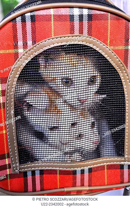 Naha, Okinawa, Japan: stray cats available for adoption