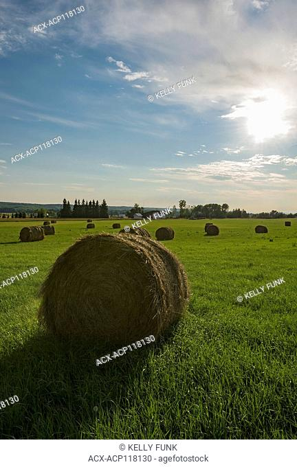Hay field and bales ready for pick up at sunset near Vanderhoof, British Columbia, Canada