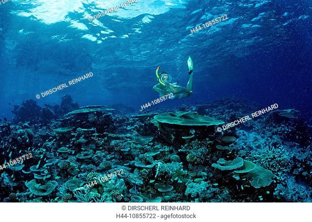 10855722, Maldives, Indian Ocean, Meemu Atoll, sno