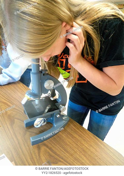 Viewing With Microscope, Wellsville, New York