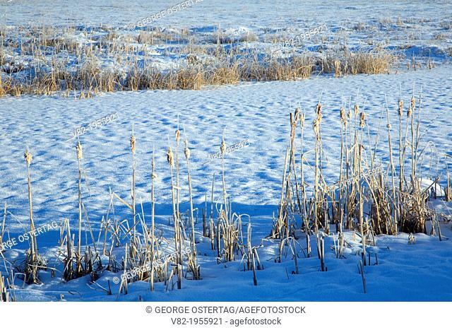 Klamath Marsh in winter, Klamath Marsh National Wildlife Refuge, Oregon