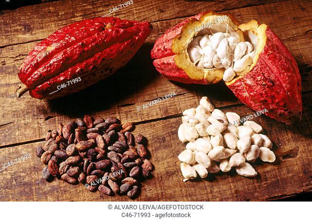 Cocoa. Grenada