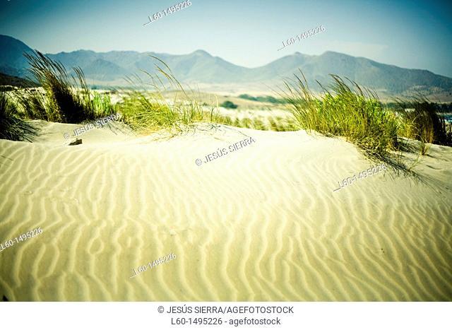 Dunes in ensenada de los Genoveses, Cabo de Gata, Almeria, Spain