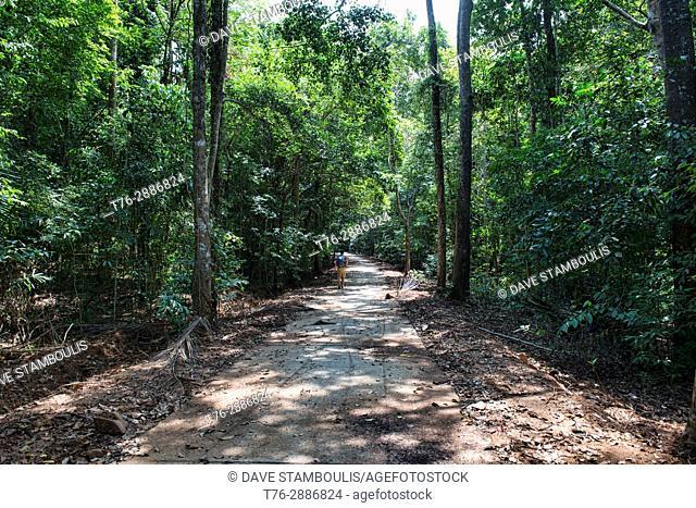 Walking in the jungle, Ko Tarutao Island, Thailand