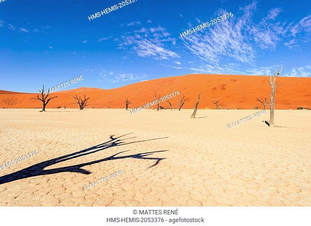 Namibia, Hardap region, Namib desert, Namib-Naukluft national park, Namib Sand Sea listed as World Heritage by UNESCO, Sossusvlei dunes, Dead Vlei