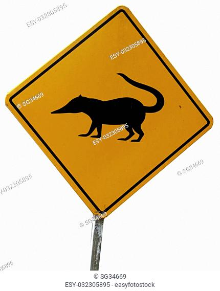 Warning sign alerting drivers to coatis or other animals crossing the road. Guatemala. White background