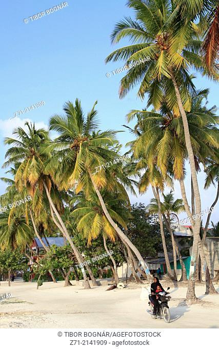 Maldives, Maafushi Island, village, palms,