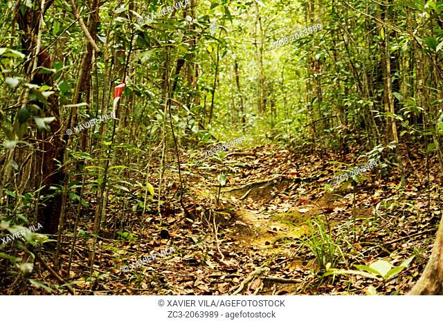 Path in the tropical forest, Island Pulau Perhentian Kecil, China Sea, near Long Beach, Terengganu, Malaysia
