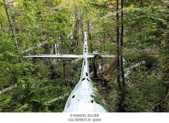 WW2 airplane wreckage in rainforest, Pacific Rim National Park, Vancouver Island, British Columbia, Canada