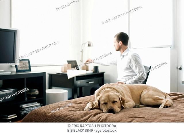 Caucasian businessman working in bedroom