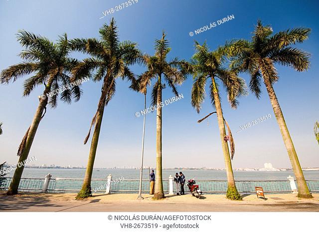 Palm tree in Tay Lake. Hanoi. Vietnam.Asia