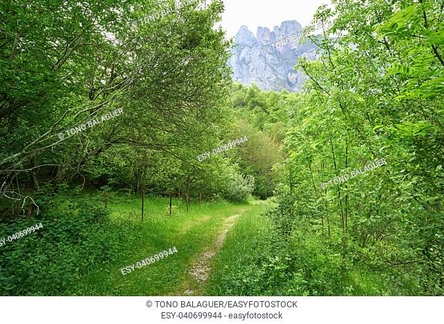 Fuente De mountains forest in Camaleno Cantabria of Spain