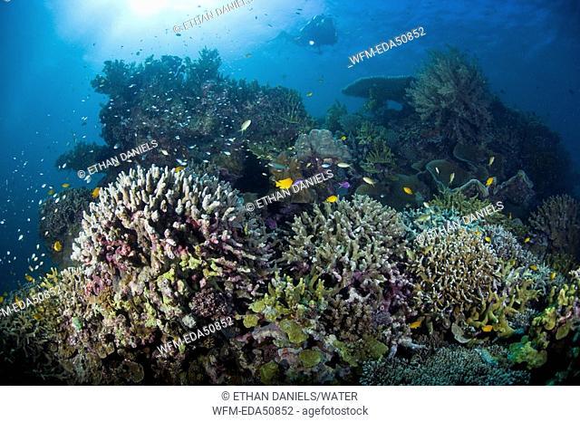 Scuba Diving at Philippines, Cabilao Island, Visayas Islands, Philippines