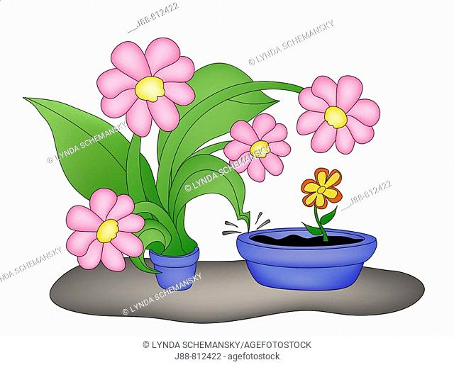 Largeflowerst in tiny pot confronting tiny flower in large pot