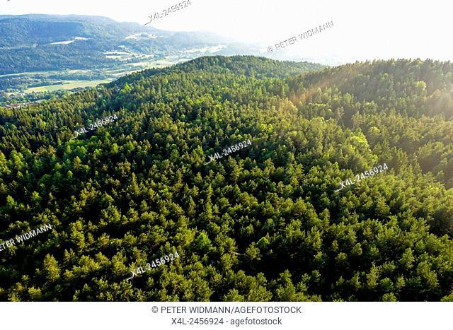 Pyramidenkogel, forest landscape, Carinthia, Austria