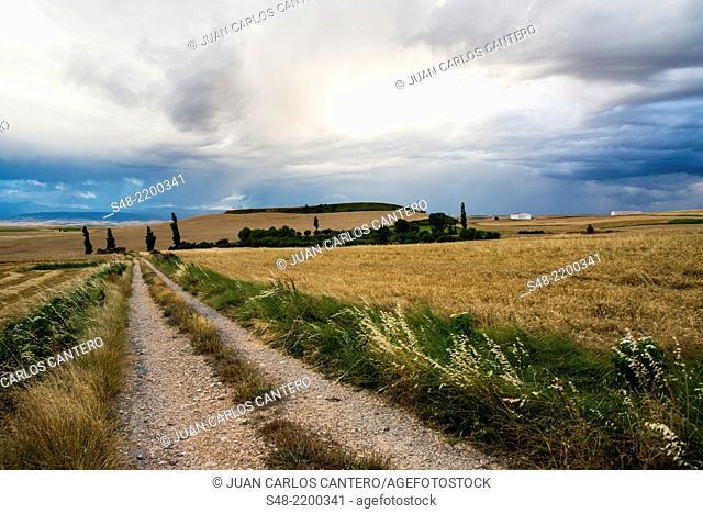 Fields in La Rioja. Spain. Europe
